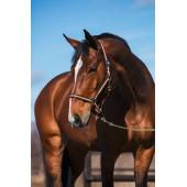 Недоуздок Hippo р-р 1 розово/коричневый для лошадей